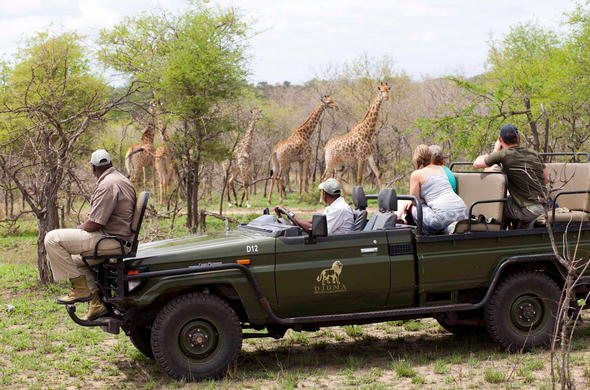 Enjoy exciting game drives in Djuma Game Reserve.