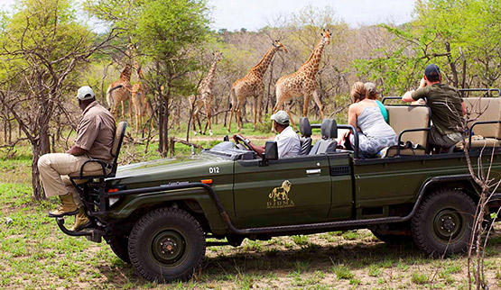 Djuma Game Reserve safari.