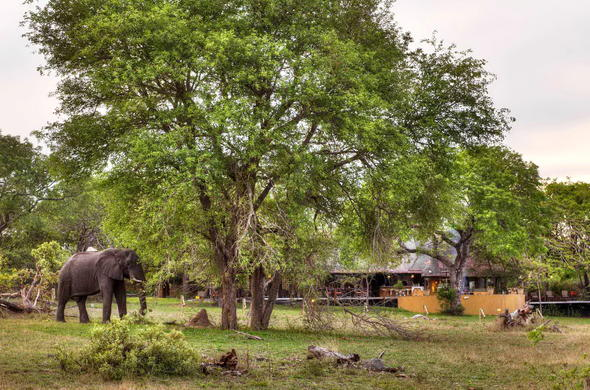 Elephant lounging around the Djuma Vuyatela Lodge premises.